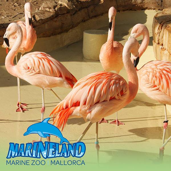 marineland-mallorca-8